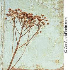 Årgång, blomma, gammal, bok, bakgrund