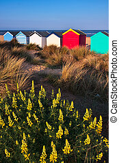 colorido, playa, Chozas, Southwold, playa, Suffolk