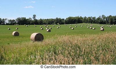 Rural landscape. Hayfield.