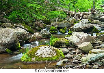 Wooden river in Shenandoah national park, VA, USA