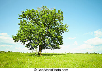 Old oak tree on green meadows - The huge old oak tree alone...