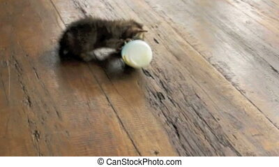 Kitten with bottle - Young kitten trying to drink by itself...