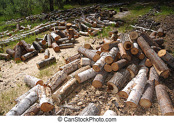 off cuts of wood in the forest