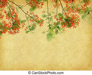 Peacock flowers on poinciana tree with Old antique vintage...