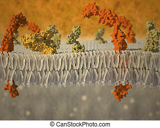 plasma membrane of a cell with associated proteins -...