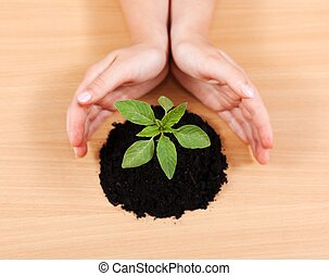 Hands protecting a plant