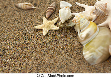 sea shells with sand - macro sea shells with sand as...