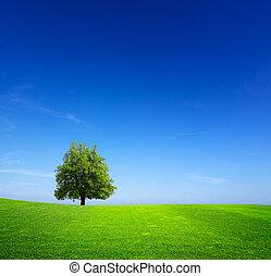 Tree on green meadow