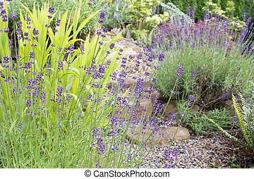 Garden Path with English Lavender Flowers and Plants