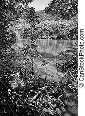 Mossman Gorge in Queensland, Australia - Vegetation of...