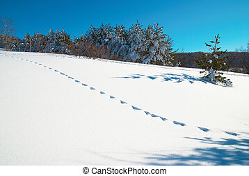 Winter, deep snow and footprints