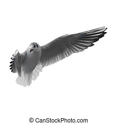 Flying seagull isolated on the white background.