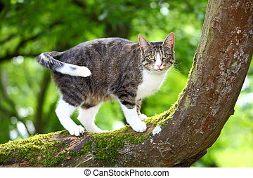 Cat - Hunting cat on a tree