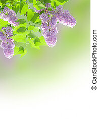 lilac background - Beautiful lilac border on blurred...