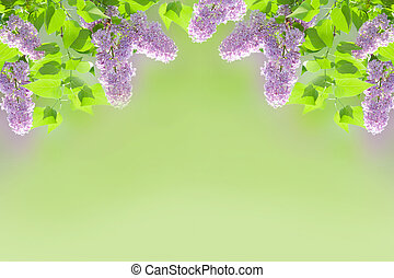 lilac background - Beautiful lilac border on green blurred...