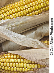 Closeup from maize ears.
