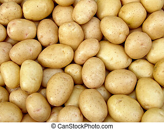 harvested potato tubers - fresh harvested yellow potato...