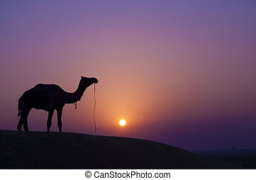 Camel at sunset - Desert landscape with camel at sunset