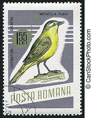 Yellow wagtail - ROMANIA - CIRCA 1966: stamp printed by...