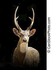 deer on black background