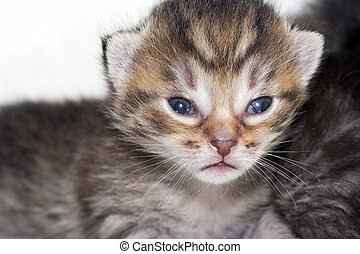 newborn kitten - Detail of the very small kitten - newborn...