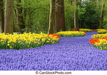 Spring flower bed in Keukenhof, the Netherlands