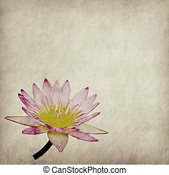 lotus with set of abstract painted background