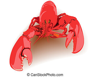 boiled lobster red on a white background