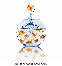 gold fish together - many gold fish together as symbol of...