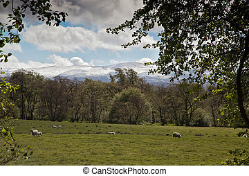 View to the Cairngorm Mountains from Aviemore