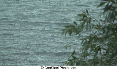 Downpour. - Branch of a willow against waves of lake during...