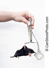 Mole caught with traps. - Mole caught with special metallic...