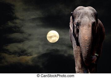 Elephant in Night - Elephant Walikng in the Night - Full...