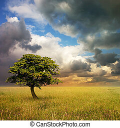 Lone Tree - A Lone Tree with Cloudy Sky and Grass