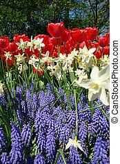 Spring flower bed in Keukenhof gardens, the Netherlands