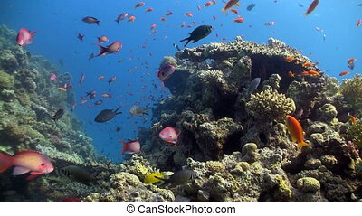 colorful fish on coral reef