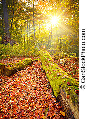 Colorful autumn in the forest - Colorful foliage in the...