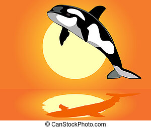 Killer Whale over the water on an orange background
