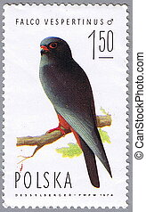 Falco vespertinus - POLAND - CIRCA 1974: A stamp printed in...