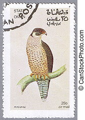 Peregrine - STATE OF OMAN - CIRCA 1972: A stamp printed in...