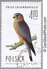 Falco columbarius - POLAND - CIRCA 1974: A stamp printed in...