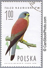 Falco naumanni - POLAND - CIRCA 1974: A stamp printed in...