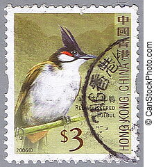 Red-whiskered bulbul - HONG KONG, CHINA - CIRCA 2006: A...