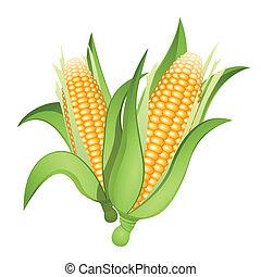 orejas, maíz
