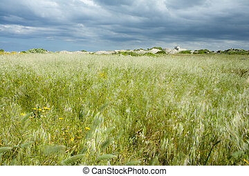 Grass Field with Stormy Weather