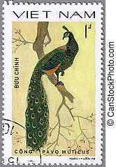 Green peafowl - VIETNAM - CIRCA 1978: A stamp printed in...
