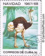 Ostrich - CUBA - CIRCA 1967: A stamp printed in Vietnam...