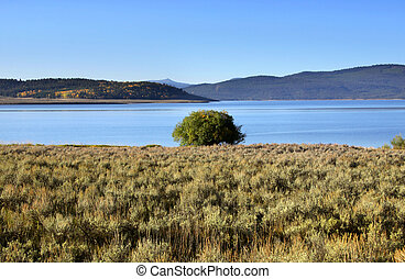 Hebgen lake - Single tree by Hebgen lake near yellowstone...
