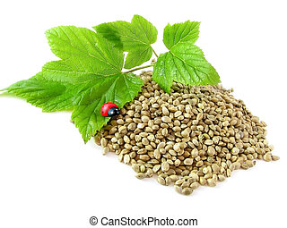 hemp seeds, twig and ladybug isolated on white background