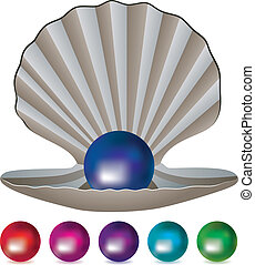 pearls and a shell - vector set of pearls and a shell